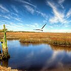 A Peaceful Day at HBSP by TJ Baccari Photography