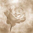 Faded Rose by Lynn Bolt