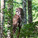 Abgehaltene Eule im Wald 2 von Peggy Collins