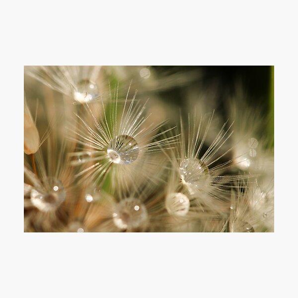 Sparkle Raindrops Photographic Print