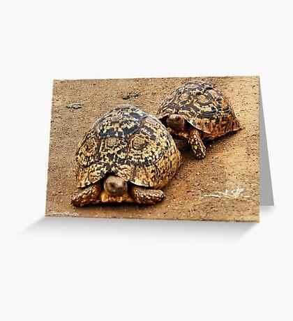 FOLLOWING HER - THE  MOUNTAIN - LEOPARD TORTOISE – Geochelone pardalis Greeting Card