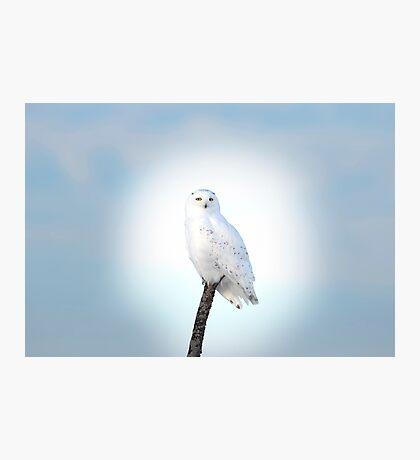 Heavenly Snowy Owl Photographic Print