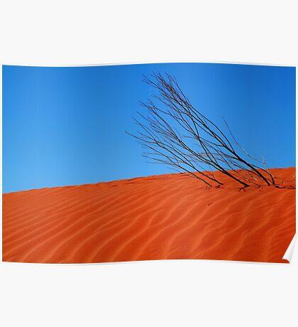 Desert,N.T. Poster