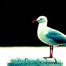 Seagull simplicity. by scottsphotos