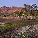 Dawn at the Heysen Range by Peter Hammer