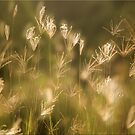 Whispers on the Wind by Kym Howard