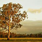 Australian Gum by Kate Wall