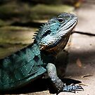 Water dragon by Jessy Willemse