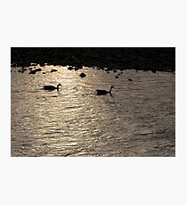 Nessy and co. Photographic Print