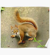 Scene From A Medieval Tapestry ~ With Red Squirrel Poster