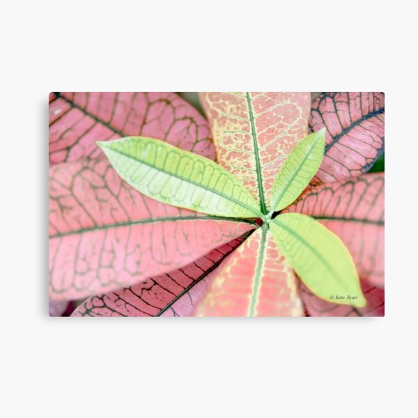 Dreamy Pastel Pink & Green Varigated Leaves Photography Canvas Print
