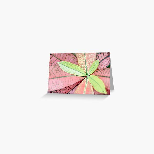 Dreamy Pastel Pink & Green Varigated Leaves Photography Greeting Card