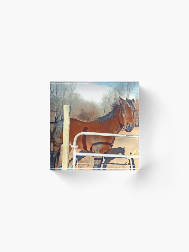 Alternative Ansicht von Braunes Pferd Bild Acrylblock