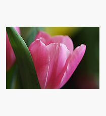 Perfectly Pink Photographic Print