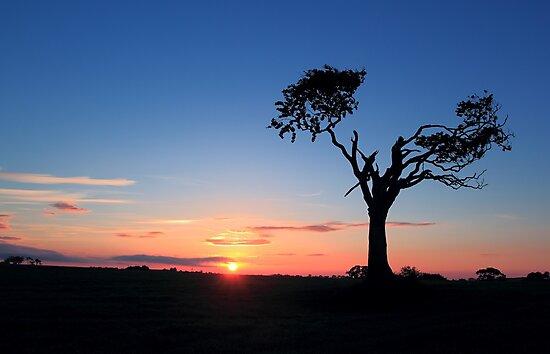Sunrise...Just Waking Up by Wrayzo
