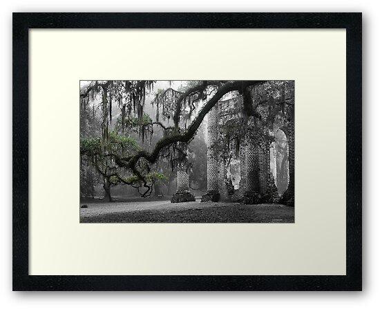 Oak Limb by Scott Hansen