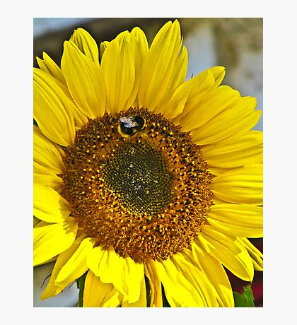 Dont Worry Bee happy! Photographic Print