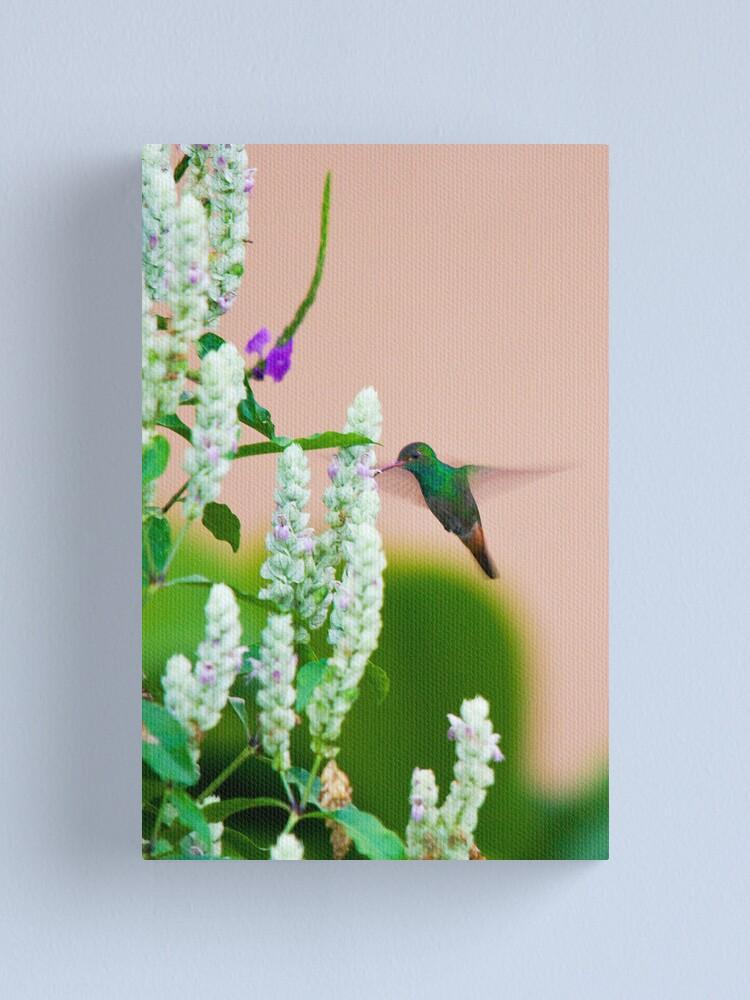 Alternate view of Hummingbird (vertical) In Costa Rica Canvas Print