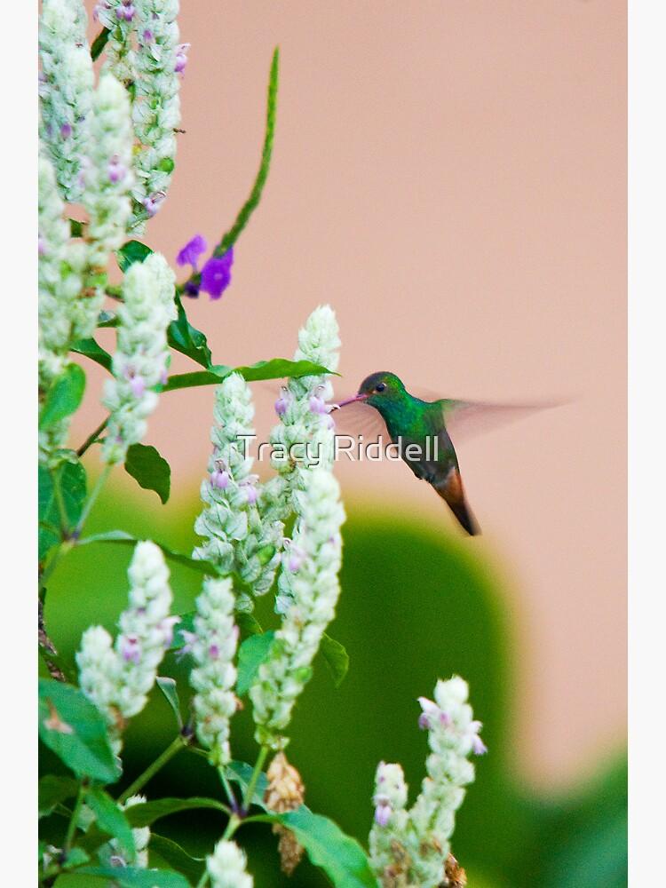 Hummingbird (vertical) In Costa Rica by taos