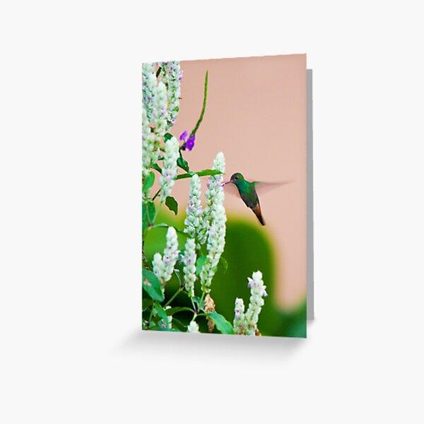 Hummingbird (vertical) In Costa Rica Greeting Card