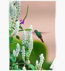 Hummingbird (vertical) In Costa Rica Poster