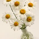 daisies in vase by OldaSimek