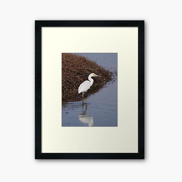 WADER ~ Little Egret by David Irwin ~ WO Framed Art Print