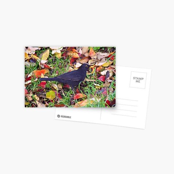 EXOTIC ~ Common Blackbird 4maXWVdM by David Irwin Postcard