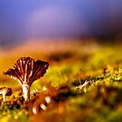 Monks Moss by Rory Garforth