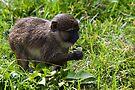 Swamp Monkey by eegibson