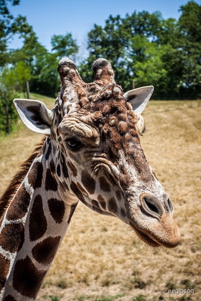 Giraffe Close Up by eegibson