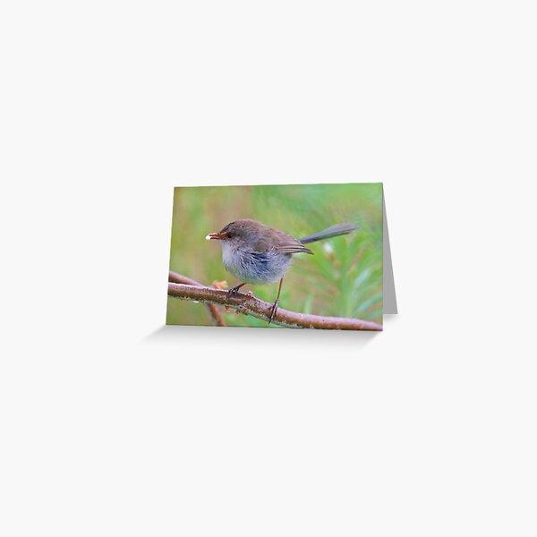 WREN ~ Superb Fairy-wren mS9w3ES2 by David Irwin Greeting Card