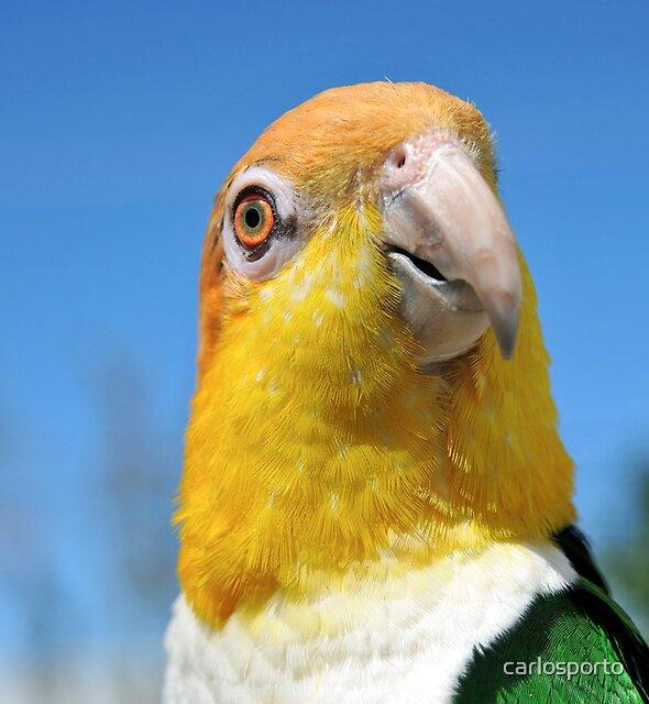 LoveBird by carlosporto