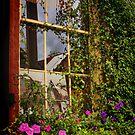 Window Floral by Barbara  Brown