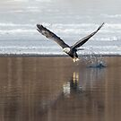 Bald Eagle 2018-12 by Thomas Young
