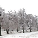 Little Ice Trees All In a Row by Linda Miller Gesualdo