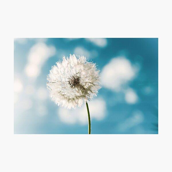 Flower - Taraxacum Officinale Photographic Print