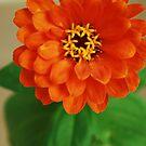 Orange by jwjanie
