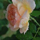 The dew of heaven kisses my heart.  by Lozzar Flowers & Art