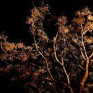 moonlight tree by TessAndre