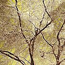 Winter Beech Abstract by SexyEyes69