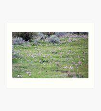 Grass Widow Meadow Art Print
