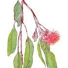 Flowering Silver Princess Eucalyptus Branch - Watercolour by Zoya Makarova