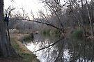 Cypress Creek View by Cathy Jones