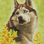 Poised Siberian Husky by BarbBarcikKeith