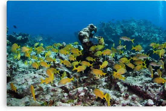 Lots of Yellow fish by muzy
