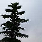 nettles by keatsphotos