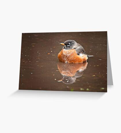 American Robin Greeting Card