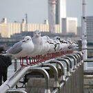 Seagulls by thatssoron