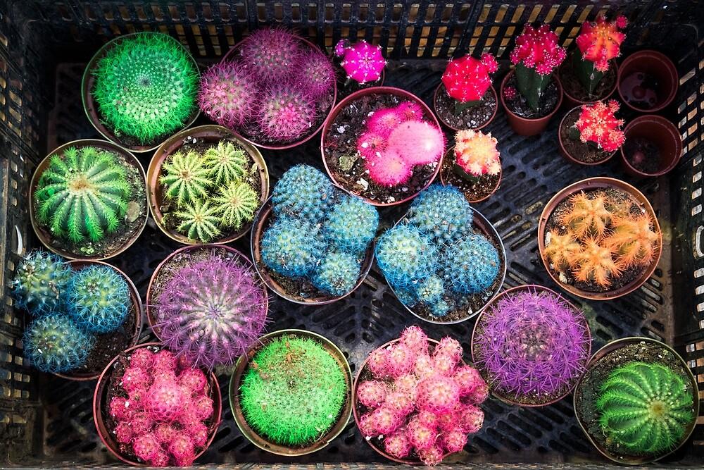 Cactus rainbow by Aiin Ojani